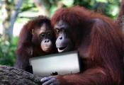 Ipad Games That Orangutans Play 